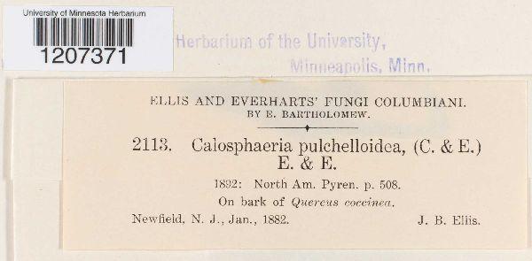 Calosphaeria pulchelloidea image