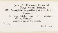Calosphaeria pusilla image