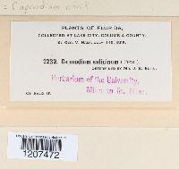 Capnodium citri image