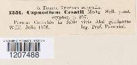 Capnodium cesatii image