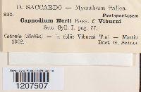 Capnodium nerii image