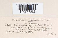 Cercospora ageratoides image