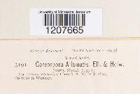 Cercospora alismatis image