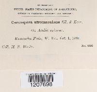 Cercospora atromaculans image
