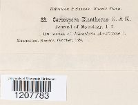 Cercospora diantherae image