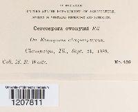Cercospora euonymi image