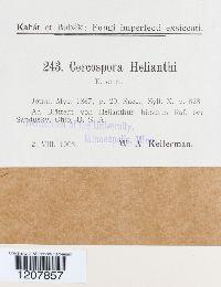 Cercospora helianthi image