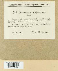 Cercospora majanthemi image