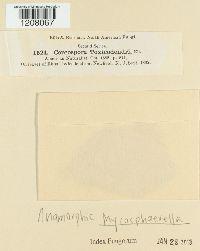 Cercosporella toxicodendri image