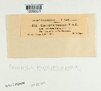 Cercospora vernoniae image