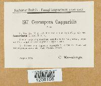 Image of Cercospora capparis