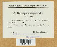 Cercospora depazeoides image