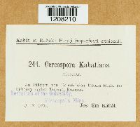 Image of Cercospora kabatiana