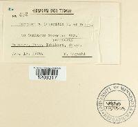 Cercospora lateritia image