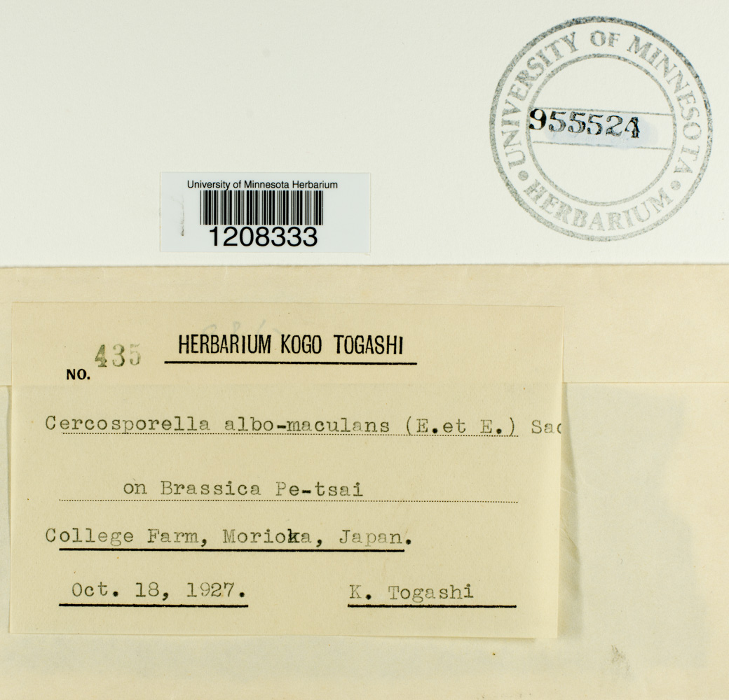 Pseudocercosporella capsellae image