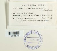 Coleroa chaetomium image