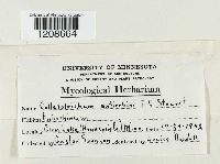 Colletotrichum coccodes image