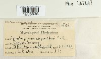 Cylindrosporium chrysanthemi image