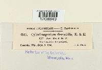 Cylindrosporium clematidis image