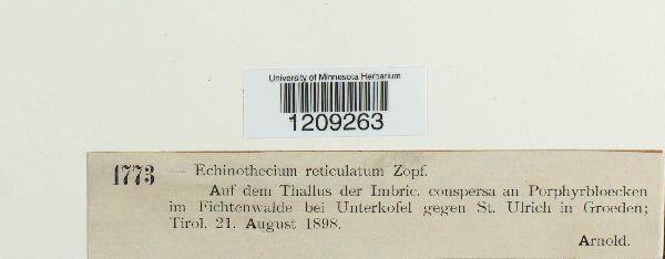Echinothecium reticulatum image