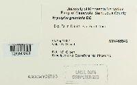 Blumeria graminis image