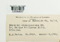 Golovinomyces cichoracearum image