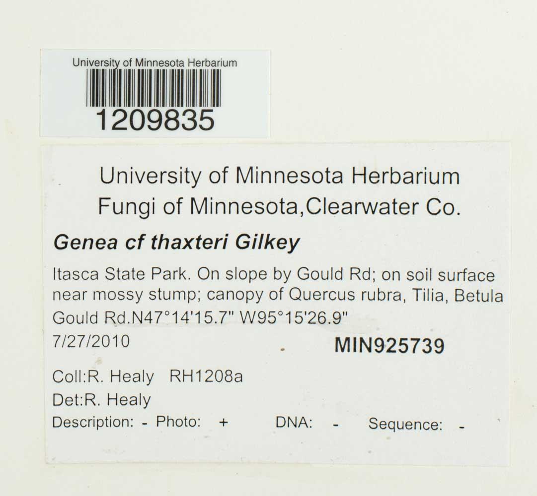 Genea thaxteri image