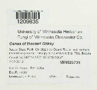 Image of Genea thaxteri