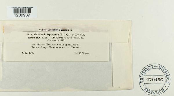Gnomonia leptostyla image