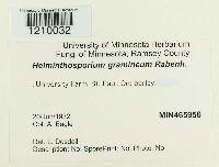 helminthosporiose gramineum