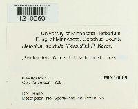 Hymenoscyphus scutula image
