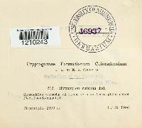 Hypoxylon rutilum image