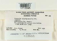 Hypoxylon sclerophaeum image