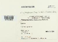 Leptosphaerulina trifolii image