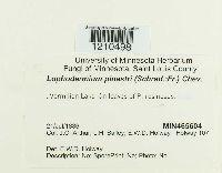 Lophodermium pinastri image
