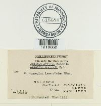 Meliola affinis image