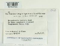 Dothiora taxicola image