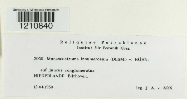 Monascostroma innumerosum image