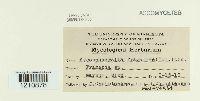 Mycosphaerella fragariae image