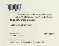 Mycosphaerella pinodes image