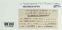 Mycosphaerella ribis image