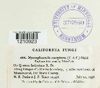 Mycosphaerella caespitosa image