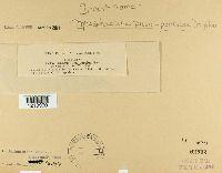 Mycosphaerella pruni-persicae image