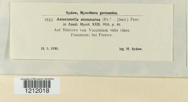 Mycosphaerella stemmatea image