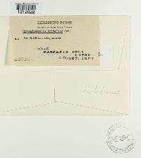 Mycosphaerella brideliae image