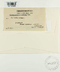 Mycosphaerella caricae image