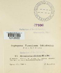 Mycosphaerella coerulea image
