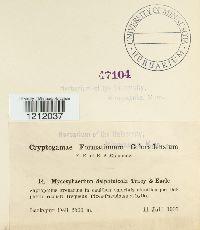 Mycosphaerella delphiniicola image