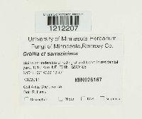 Orbilia sarraziniana image