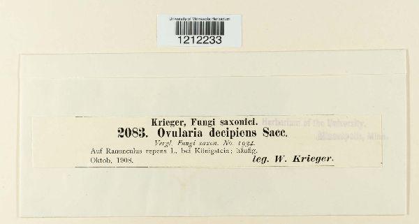 Ovularia image